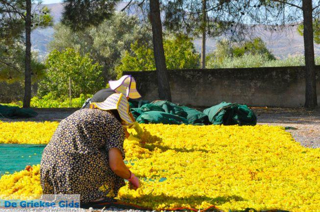 Rozijnen van druiven Kreta